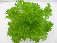 Salanova vihreä