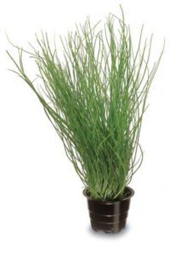 Valio Viola® kevyt 200 g ruohosipuli tuorejuusto laktoositon