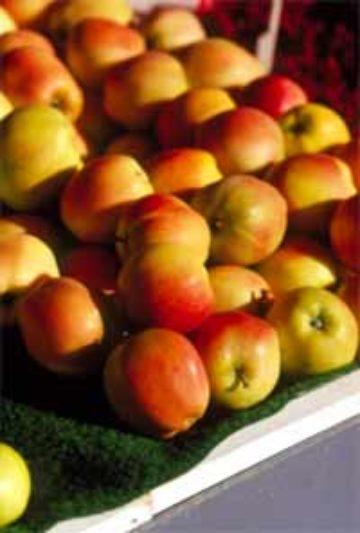 Omenan Ravintosisältö